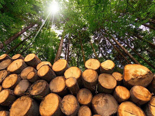 雑木林の管理