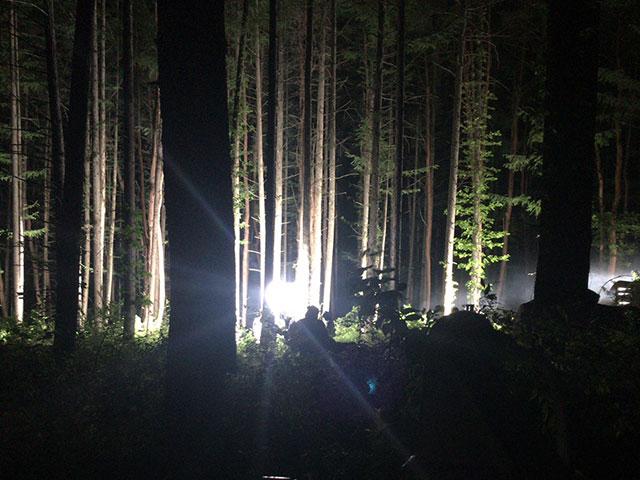R指定 / forest制作支援