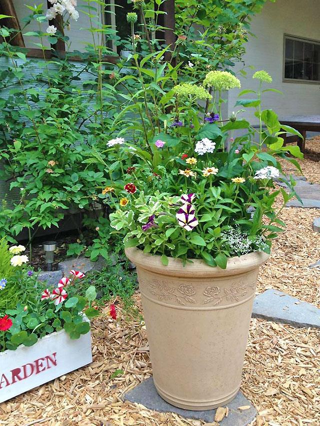 コンテナガーデン一年草の花々は鉢植えにして季節ごとに楽しみます