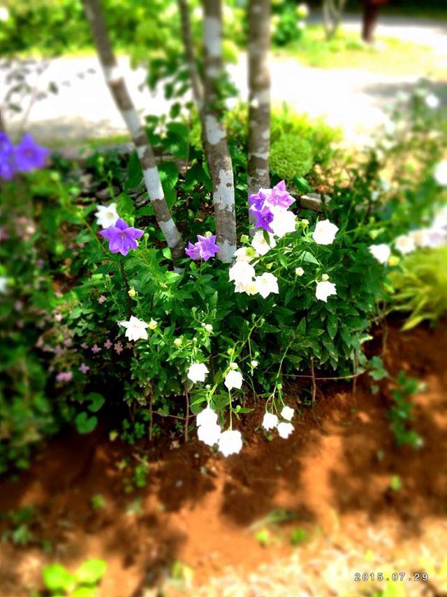 シェードガーデン中低木の下には日陰に適した植物を